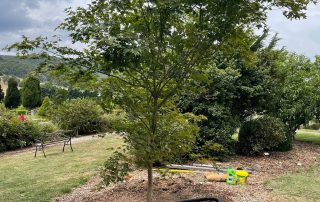 Tree Planting 3 at Wooling Hill Memorial Estate